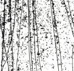 MARDI GRAS 4200